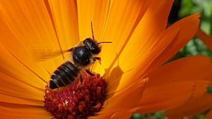 LTO boerenerf place to bee wilde bijen en hommels biodiversiteit