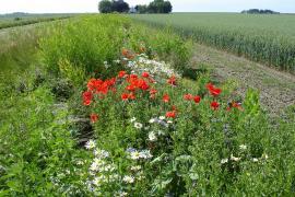 Voedselaanbod en biodiversiteit - Bij en Akker