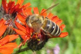 Voedselaanbod en biodiversiteit - Op en rond het erf