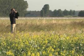 Film akkerranden in de Hoeksche Waard